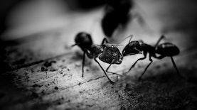 Kesetiakawanan Semut Hitam Dibuktikan oleh 2 Siswa asal Medan