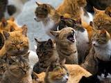 Gambar sampul Selain di Jepang, Indonesia Juga Punya Pulau yang Penduduknya Kucing