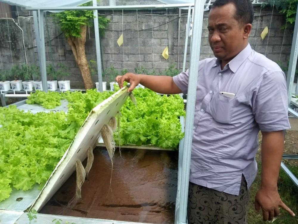 Uniknya Kebun Hidroponik Tenaga Surya Di Noja Bali Good