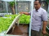 Gambar sampul Uniknya Kebun Hidroponik Tenaga Surya di Noja Bali