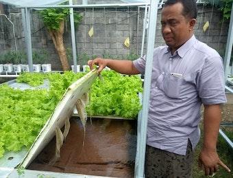 Uniknya Kebun Hidroponik Tenaga Surya di Noja Bali