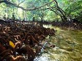 Gambar sampul Foto: Padaido, Negeri Indah yang Terhampar di Bibir Pasifik