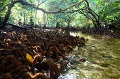 Foto: Padaido, Negeri Indah yang Terhampar di Bibir Pasifik