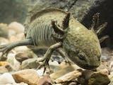 Gambar sampul Inilah 10 Spesies Baru di 2018, Salah Satunya Ditemukan di Indonesia