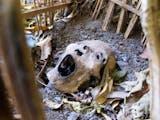 Gambar sampul Selain Eksotis, Bali Juga Ada Sisi Mistis