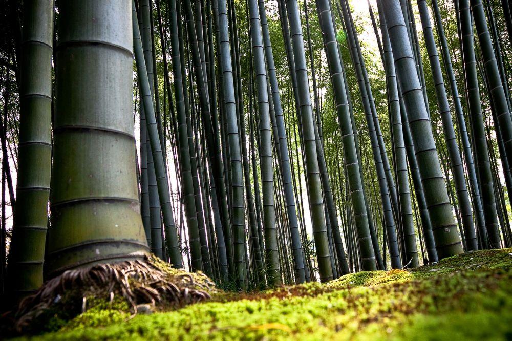Ngelmu Pring Makna Filosofis Pohon Bambu Dalam Pandangan