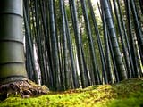 Gambar sampul Ngelmu Pring, Makna Filosofis Pohon Bambu dalam Pandangan Hidup Orang Jawa