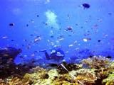 Gambar sampul Bangsring, Desa Wisata Pinggir Pantai yang Dikelola Warga