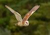 Kembali Ke Alam, Petani Bali Gunakan Burung Ini Atasi Hama Tikus