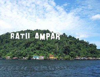 Keren! Hutan Mangrove Terlengkap Ada di Indonesia
