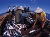 Jokowi: Nelayan Indonesia Harus Siap Menyambut Offshore Aquaculture