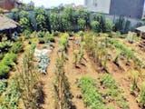 Gambar sampul Begini Inovasi Urban Farming dari Kelurahan Cisaranten Kidul, Bandung