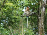Gambar sampul Kupas Tuntas Biodiversitas Indonesia