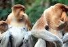 Wow! Hewan Endemik Ini Hanya Ada Di Indonesia