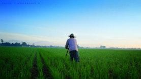 Belajar Bercocok Tanam di Padang Panjang