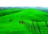 Melihat Indahnya Savana Hijau New Zealand ala Indonesia