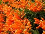 Gambar sampul Bunga Agustus Bersemi di Hari Kemerdekaan