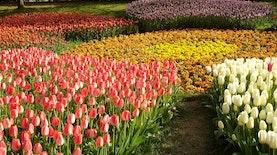 International Flower Competition di Bali, Sebagai Bentuk Kepedulian Lingkungan