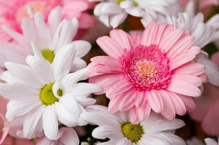 Kabupaten Sukabumi Penghasil Bunga Terbesar Nasional, Tembus Hingga Negara Jepang