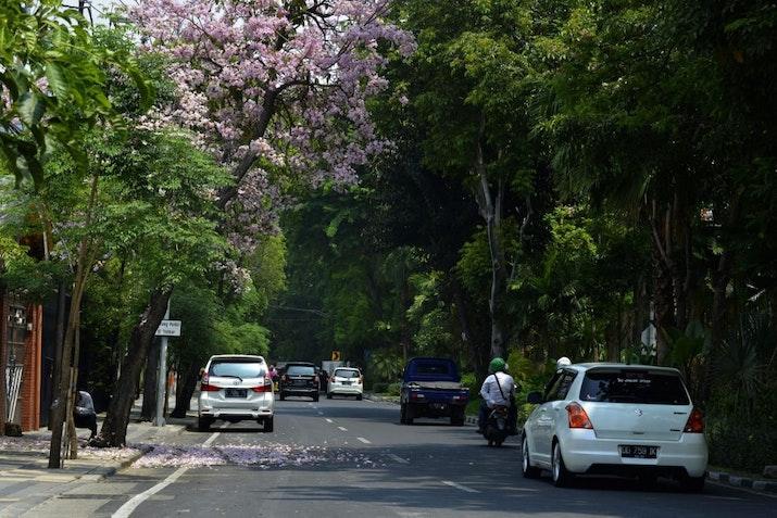 Selain Surabaya, 5 Kota Ini Juga Dihiasi Bunga Tabebuya