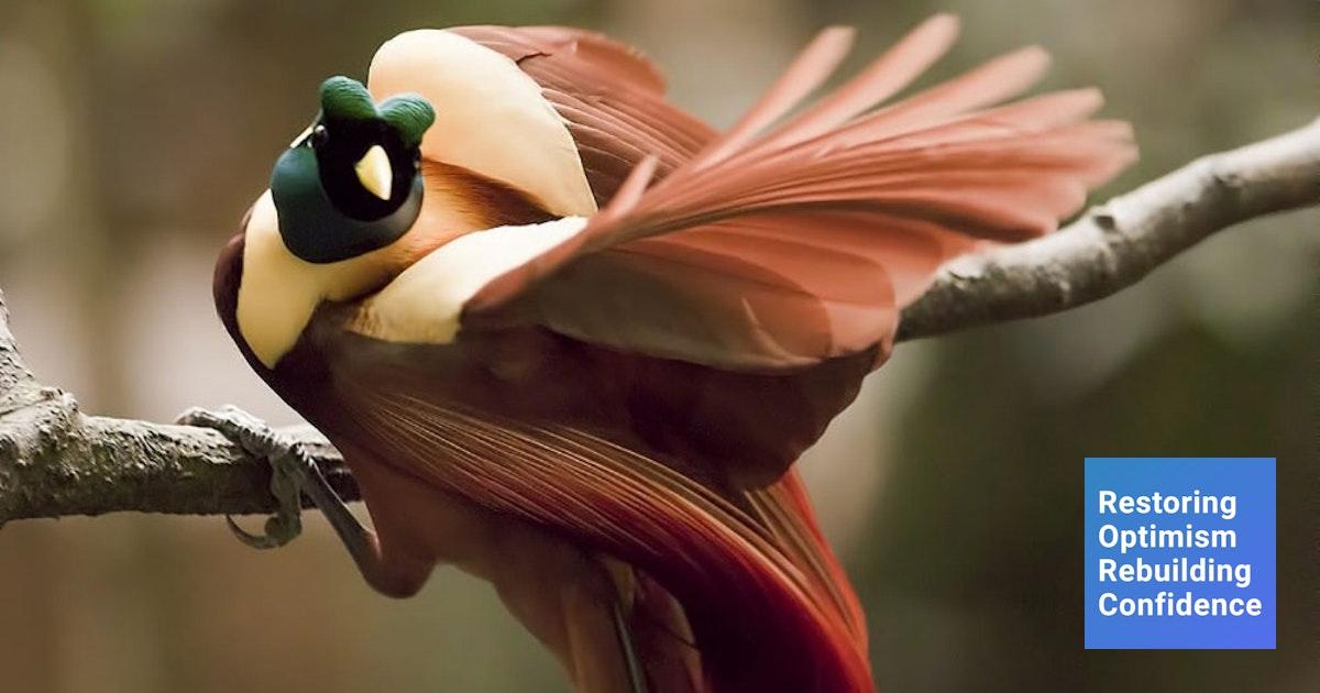 5 Burung Cantik Asli Indonesia Yang Sudah Mulai Langka