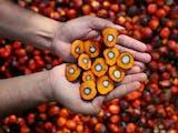 Gambar sampul Indonesia Kuasai Pasar Permintaan Minyak Sawit di Pakistan