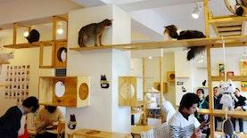 Cat Cafe Pertama di Indonesia