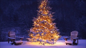 7 Pohon Natal Unik di Berbagai Negara
