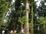 Gambar sampul Berkat Green Wall Taman Nasional Yang Mulanya Terdegradasi Kini Menjadi Hijau