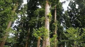 Berkat Green Wall Taman Nasional Yang Mulanya Terdegradasi Kini Menjadi Hijau