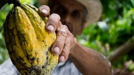 Potensi Cokelat Indonesia tak Kalah dari Negara Lain