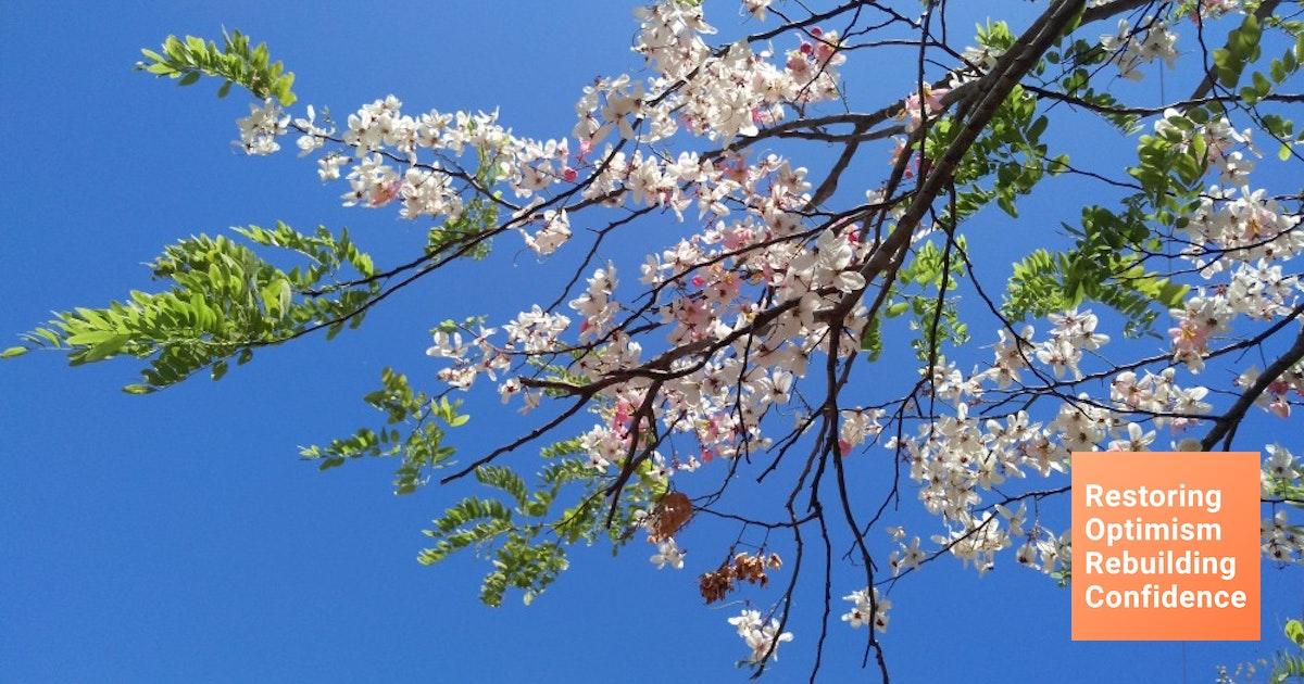 Tak Perlu Ke Jepang 5 Tempat Di Indonesia Ini Ada Bunga Sakura