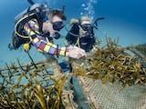 Bukti Nyata Unpad Dukung Konservasi Laut
