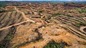 Deforestasi, Antara Kebutuhan Ekonomi Dan Krisis Lingkungan