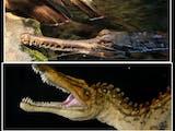 Dinosaurus Masih Hidup!  Dunia yang Hilang di Khatulistiwa