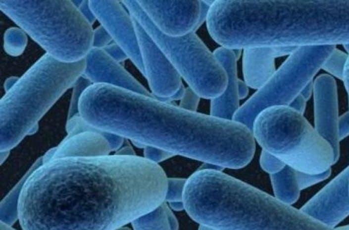 Ditemukan Mikroba AntiKanker di Selatan Sumatera