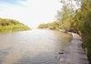 Cerita Perempuan dari Naga Lawan Penyelamat Mangrove