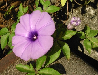Aku untuk Bunga-bunga Papua yang Bermekaran