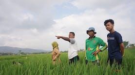 BPP dan KKN 73 UMM Bantu Petani Dalam Pemberantasan Hama Wereng