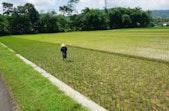 Wahyudi: Jaga Alam dengan Pola Tanam Organik