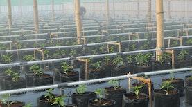 Pertanian Modern Berteknologi Canggih dan Otomatis di Indonesia