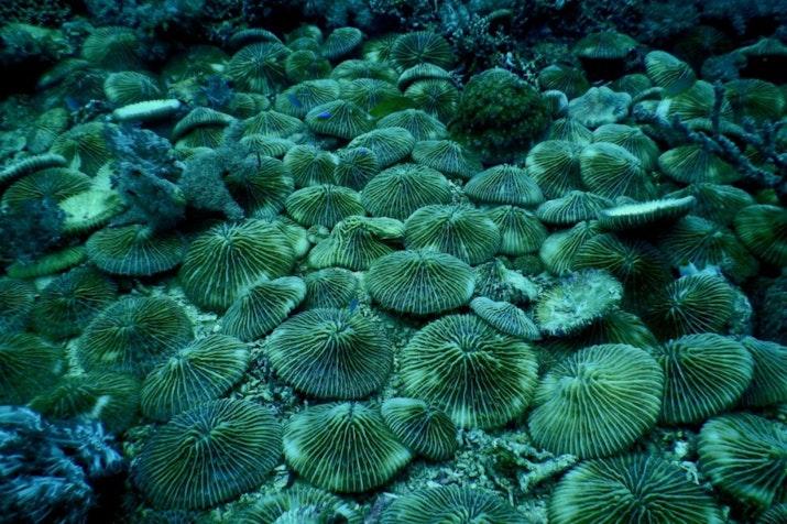 Surga Bawah Laut Teluk Maumere