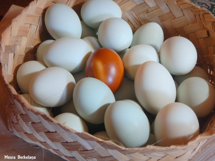 Empat Chef Kondang Perkenalkan Masakan Indonesia ke Masyarakat India. Mereka suka Telur Asin?
