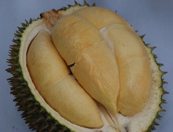 Durian Terong dari Kalbar, Sudah Pernah Coba ?