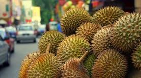 Mungkin, Anda Jarang Melihat dan Menikmati Rasa Durian-durian Asli Indonesia ini