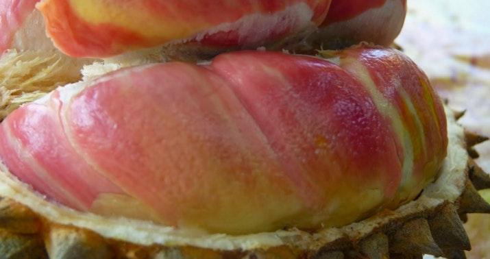 Awal Mula Di Balik Nikmatnya Durian Merah Banyuwangi