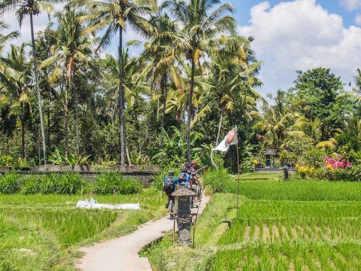 7 Hal Yang Tidak Boleh Dilewatkan Saat Berwisata ke Ubud Bali