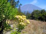 Gambar sampul Keindahan Bunga Edelweis di Kawasan Gunung Bromo