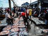 Gambar sampul Pertumbuhan Ekspor Ikan Indonesia Ungguli Tiongkok