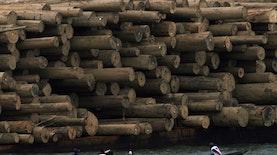 Pertama di Asia, Indonesia Pelopori Ekspor Kayu ke Uni Eropa